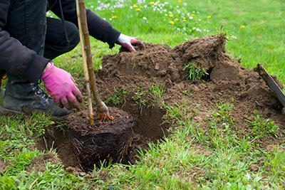 Baden-Baden-Rebland: Für jedes neugeborene Kind im Rebland stellt der Ortschaftsrat einen Gutschein für die Anschaffung eines Baumes zur Verfügung.