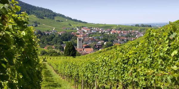 Mauerberg in Neuweier